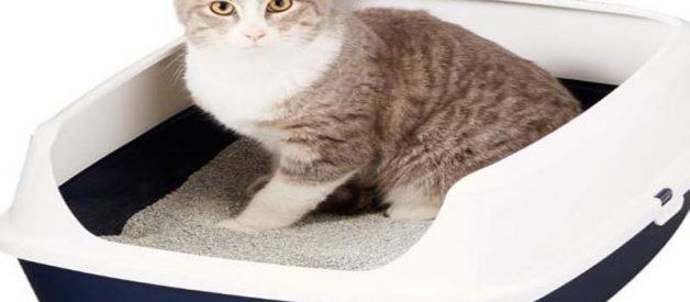 Daftar Merk Pasir Kucing Yang Bagus dan Wanginya Awet