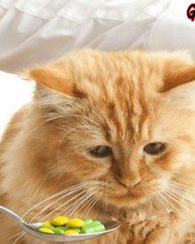 3 Rekomendasi Merk Vitamin Yang Bagus Untuk Kucing Kesayangan